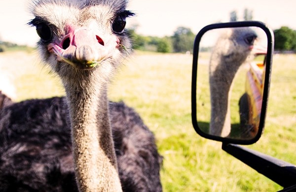 Woburn safari