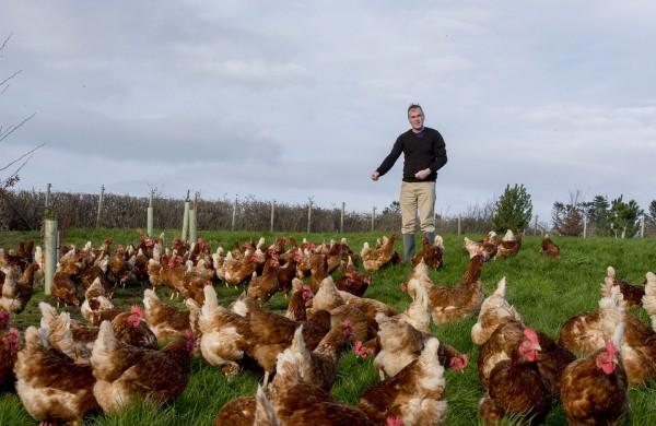 Fowlers Free Range Eggs